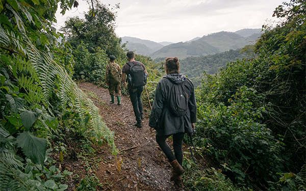 Hiking to Gorillas Uganda